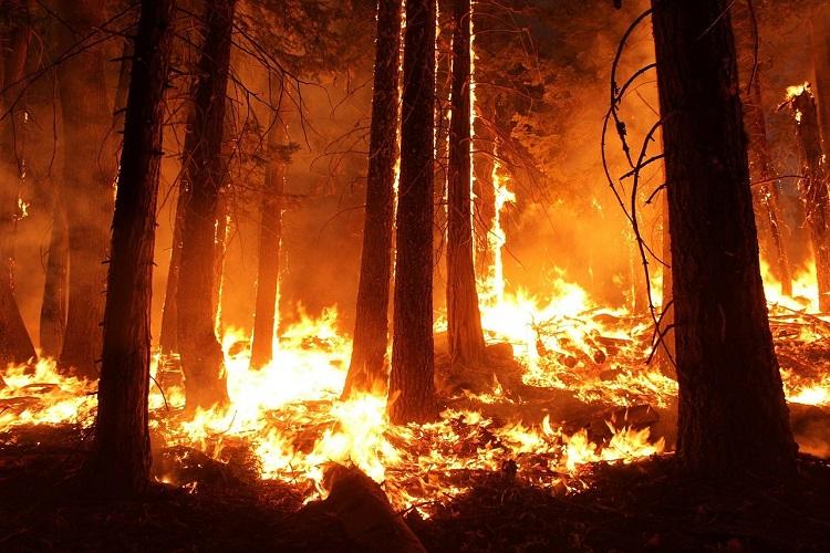 Chevron contributes to California Fire relief